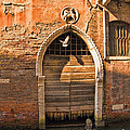 Archway With Bird In Venice by Sheila Laurens