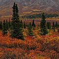 Arctic Color by Kevin Buffington