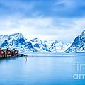 Arctic Dawn Lofoten Islands by Richard Burdon