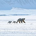 Arctic Family by David Broome