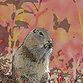 Arctic Ground Squirrel In Autumn Colors Abstract by Tim Grams