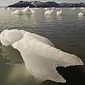 Arctic Ice Floe by John Shaw
