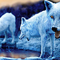 Arctic White Wolves by Mal Bray