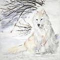 Arctic Wolf by Sandy Brooks