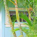 Areca Palms At The Window by Mary Deal