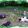 Argentina Cat Park by Joan  Minchak