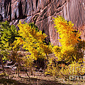 Arizona Autumn Colors by Bob Phillips