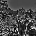 Arizona Bell Rock Valley N9 by John Straton