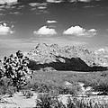 Arizona Desert #1 by John Nelson