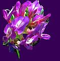 Arizona Desert Flowers by Bob and Nadine Johnston