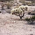 Arizona Desert Shrubs by ChelsyLotze International Studio