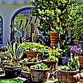 Tucson Garden by Maria Coulson