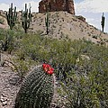 Arizona Icons by Joe Kozlowski