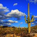 Arizona Landscape 2 by Bob Christopher