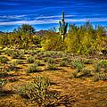Arizona Landscape Iv by David Patterson