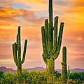 Arizona Life by James BO  Insogna