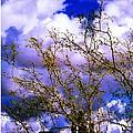 Arizona Mesa Through A Mesquite Tree by L L Stewart