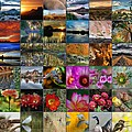 Arizona Mosaic by Tam Ryan