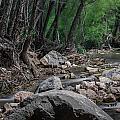 Arizona Riparian Flows by Aaron Burrows