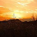 Arizona Sunset II by Barbara Zahno