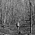 Arizona Winter Trail by John Haldane