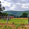 Arkansas Farmland by Lydia Holly