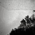 Arkansas Trees by H James Hoff