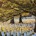 Arlington National Cemetery Washington Dc by Carol VanDyke