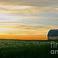 Aroostook Sunset by Laura Mace Rand