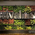 Arrival Sign Arrow And Flowers At Singapore Changi Airport by Imran Ahmed