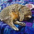 Cat Nap by Tim Buisman