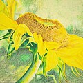 Sunflower Print Art For Sale Colored Pencil Floral by Diane Jorstad