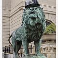 Art Institute Lion by Patrick  Warneka