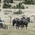 Art Of Horse Plowing by Janice Pariza