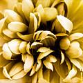 Artificial Flower by Mark Llewellyn