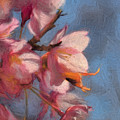 Artisic Painterly Cherry Blossoms Spring 2014 by Leif Sohlman