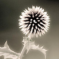 Artistic Black And White Flower by Don Johnson
