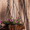 Artistic Hanging Basket Of Petunias by John Harmon