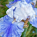 Artistic Japanese Iris Blue And White Flower by Valerie Garner