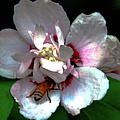 Artistic Shades Of Light And Pollinating Bee by Optical Playground By MP Ray