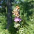 Artistic Butterfly Stand  by Neal Eslinger