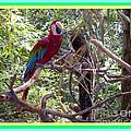 Artistic Wild Hawaiian Parrot by Joseph Baril