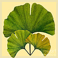Arts And Crafts Movement Ginko Leaves by Melissa A Benson