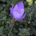 Purple Flower by John Freidenberg