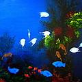 Aruba Reef by D L Gerring