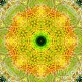 Moss Mandala by Susan Bloom