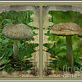 As I Age - A Mushroom's Tale by Mother Nature