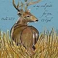 As The Deer by Marie Clark