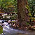 As The River Runs by Karol Livote