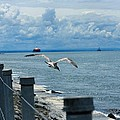 As The Seagull Flies by Gothicrow Images